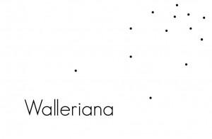 Walleriana, jambes légères